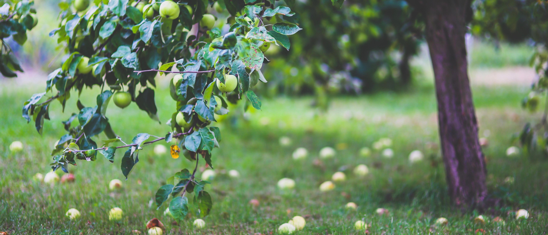 Apple Picking image