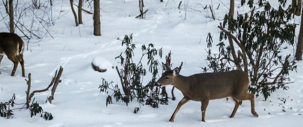 Deer Damage Blog Post