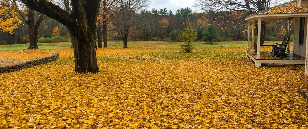 Leaf Clean Up Blog Pic