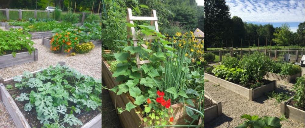 Vegi gardens blog