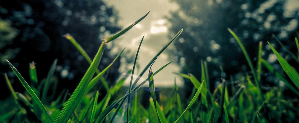 deer-cape-cod-woods.jpg