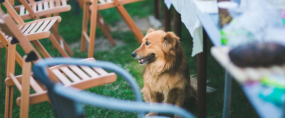 garden-party-animal-dog.jpg