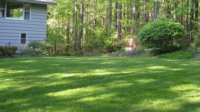 organic-fertilizer-pure-lawns-1.jpg