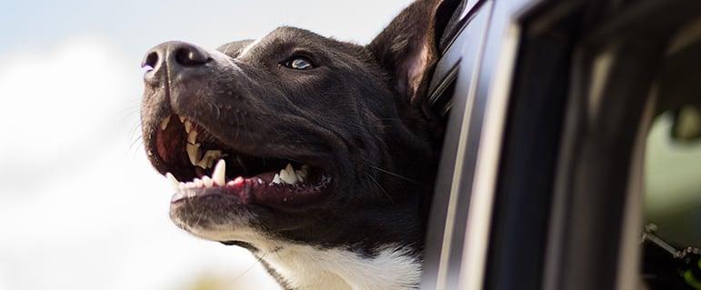 puppy-fresh-air.jpg