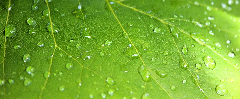 rain-leaf.jpeg