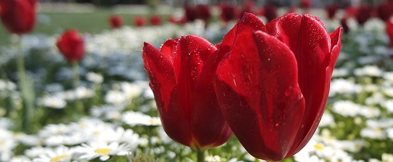 spring-flowers.jpeg