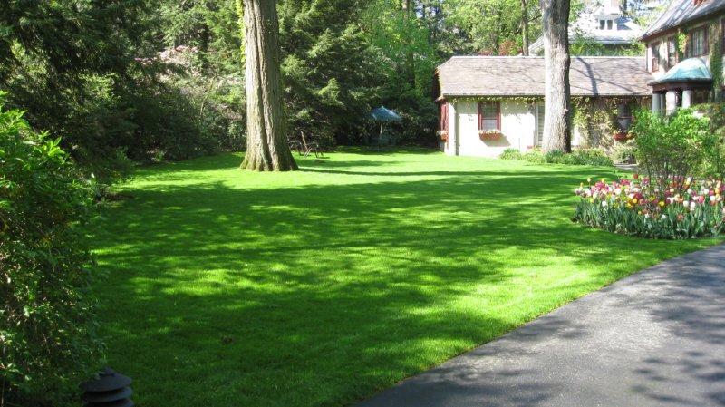 organic-lawn-purelawns.jpg