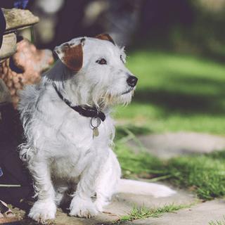 walking-garden-dog-outside.png